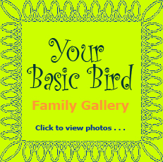 YBb Family photos